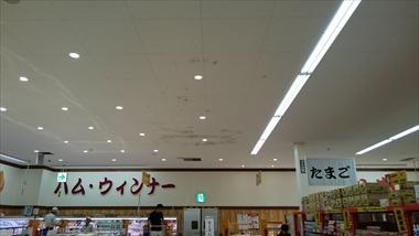 DSC_0234_R.JPG